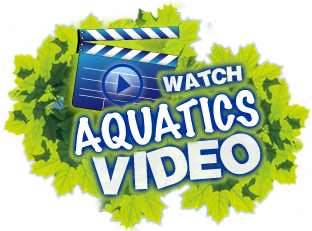 Watch The Aquatics Video